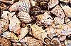 ID 3040515   Seashells background   High resolution stock photo   CLIPARTO