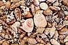 Seashells background | Stock Foto