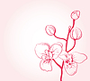 Vector clipart: cherry blossom