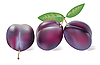 Vector clipart: three realistic plums