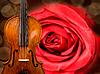 Скрипичный фон | Фото