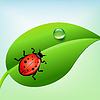 Vector clipart: ladybug on green leaf with water drop