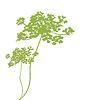 Vector clipart: background with plant green silhouette