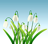Vector clipart: snowdrops background