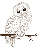 Vector clipart: owl sitting on twig hand drawing