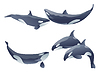 Vector clipart: set of cartoon killer whales show