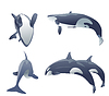 Vector clipart: set of killer whales jumping