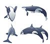 Satz von Killerwale springen