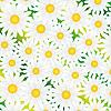 Vector clipart: white chamomiles