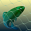 Vector clipart: Fish in the net