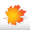 Vector clipart: Maple leaf