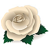 Vector clipart: White rose