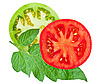 Tomato sliced with green leaf | Stock Foto