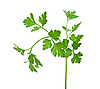 Fresh parsley  | Stock Foto