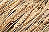 Wheat ears | Stock Foto