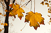 Autumn leaves | Stock Foto