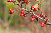 Autumn berries | Stock Foto