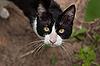 Photo 300 DPI: cat