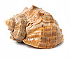Old sea shell isolated | Stock Foto