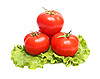 Red tomatoes and green lettuce   Stock Foto