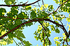 ID 3041137 | Leaves of vine on the blue background of sky | High resolution stock photo | CLIPARTO