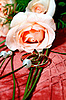 Wedding rings and rose | Stock Foto