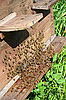 ID 3042244 | Bees near beehive | High resolution stock photo | CLIPARTO