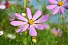 초원에 꽃 | Stock Foto