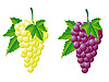 Vector clipart: grapes white and red