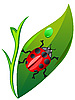Vector clipart: ladybird on leaf