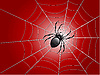 Vector clipart: spider on wed