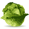 Vector clipart: cabbage