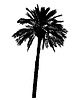 Vector clipart: silhouette of palm trees realistic