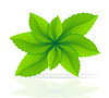Vector clipart: abstract mint leaves