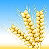 Vector clipart: Wheat