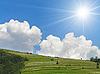 Green hills | Stock Foto
