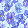 Vector clipart: Purple Iris
