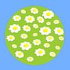 Daisy flowers on sphere