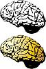 Vektor Cliparts: das menschliche Gehirn Satz
