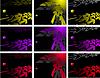 Vektor Cliparts: die Farbe abstrakten Hintergrund