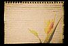 纸板上的花 | 免版税照片
