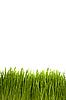 ID 3056470 | 녹색 잔디 | 높은 해상도 사진 | CLIPARTO