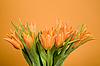 Tulips | Stock Foto