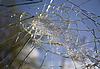 Broken Glass | Stock Foto