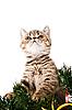 ID 3180771 | 고양이 새끼 | 높은 해상도 사진 | CLIPARTO