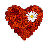 Vector clipart: Heart of roses and daisy