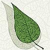 Векторный клипарт: зеленый лист с тенью