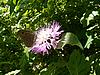 Photo 300 DPI: butterfly on beautiful flower