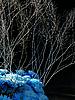 Photo 300 DPI: dark blue bouquet with herbarium