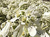 Gently white flowers  | Stock Foto
